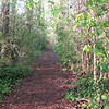I Love Dense Jungle-like Trails - Chesapeake Arboretum, Chesapeake, VA  4-10-11<br /> However this trail was like a jungle because of non-native invasive plants which take over the habitat of native plants that feed the native wildlife that God made to go with them.