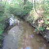 The Water Was Exceptionally Clear - Chesapeake Arboretum, Chesapeake, VA  4-10-11<br /> There was signage about watersheds and streams so it appears they've been involved in education in this arena.