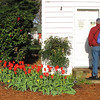Red Camellias and Tulips Contrasted the White Farmhouse - Chesapeake Arboretum, Chesapeake, VA  4-10-11<br /> Randal's reading all the important information since we were too early for them to be open.