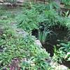 Pond at Rockwood Nature Center