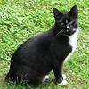 Stubbie - Cat in Yard at Basic Necessities