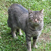 Gourmet Kitty - Cat in Yard at Basic Necessities