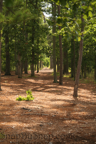 A trail leading around the original site of Jamestown at Colonial National Historic Park in Virgina.