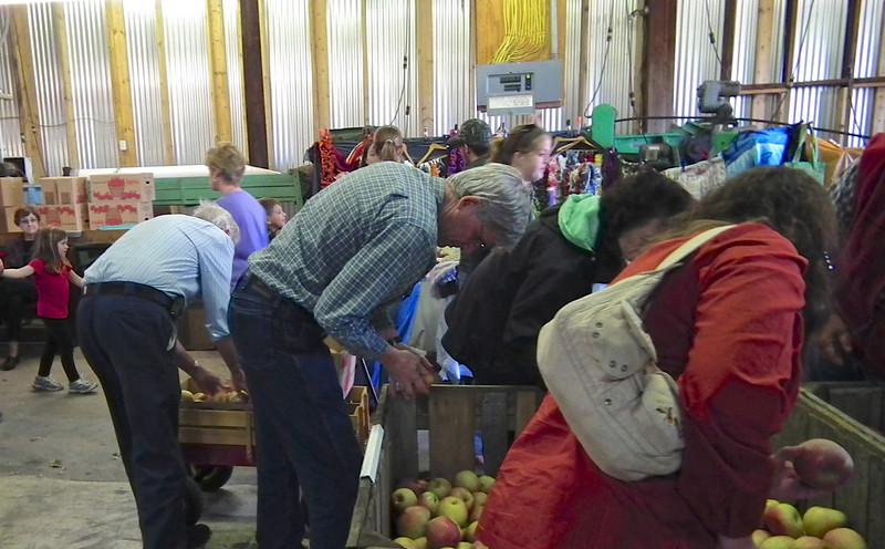 Fuji Apples Not As Pretty As Pink Lady - Drumheller's Apple Harvest Festival - Lovingston, VA  10-20-12