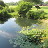 Pond - Eden Arboretum - Eastern Mennonite University - Harrisonburg, VA