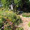 Wildflowers and Native Plants - Eden Arboretum - Eastern Mennonite University - Harrisonburg, VA