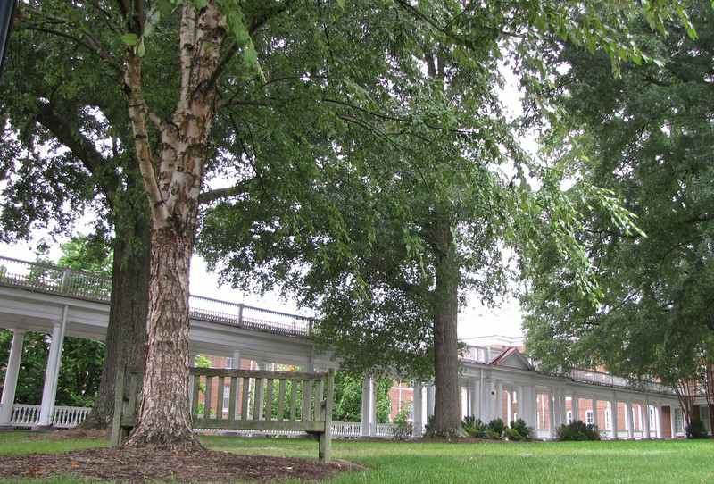 Really Long Pergola Beside French Building - Longwood University - Farmville, VA