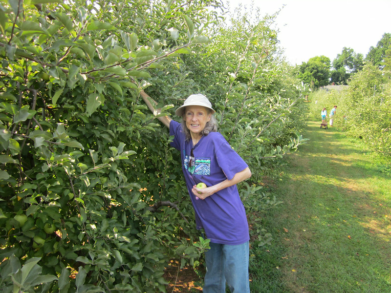 Donna Picking Apples - Fruit Hill Orchard, Palmyra, VA