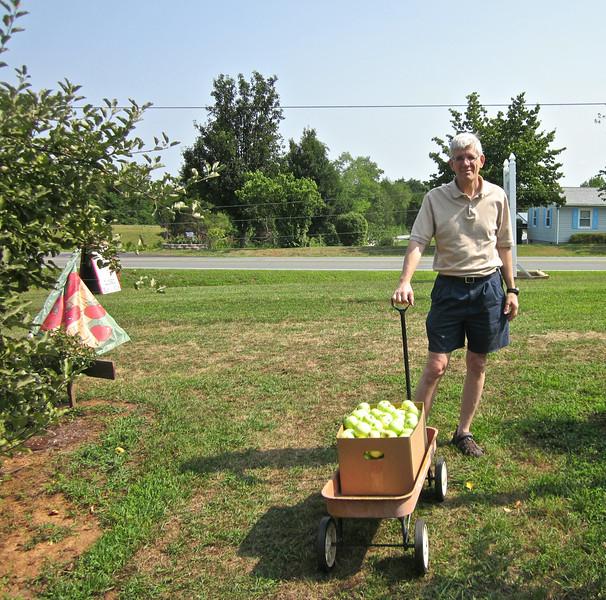 Randal Hauls the Bushel We Picked to Sales Shed - Fruit Hill Orchard, Palmyra, VA