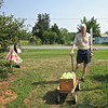 Randal Hauls the Bushel We Picked to Sales Shed - Fruit Hill Orchard, Palmyra, VA