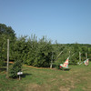 The Row Between the Flags Are the Ripe Apples - Fruit Hill Orchard, Palmyra, VA