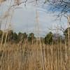 Beautiful Day at Grandview Preserve - 1-12-07