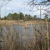 We Found Some Nice Pond and Marshland Views - Grandview Preserve - 1-12-07
