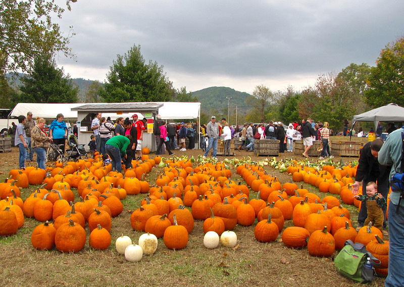 Field of Pumpkins - Graves Mountain Apple Harvest Festival - 10/19/13