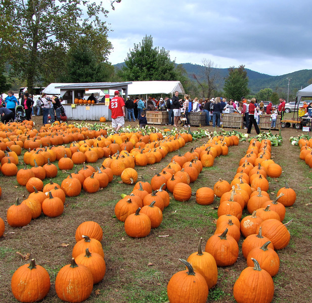 Field of Pumpkins - Graves Mountain Apple Harvest Festival - 10/19/13