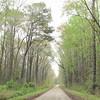 Jericho Lane Entrance to Great Dismal Swamp NWR, Suffolk, VA  4-9-11