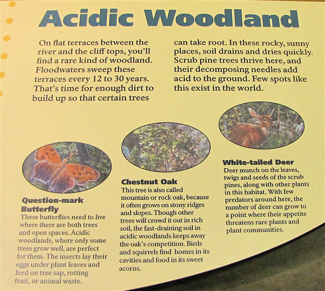 Signage About Acidic Woodland Habitat - Great Falls National Park - McLean, VA  10-1-10