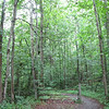 The Trail Begins - Wilson Nature Trail<br /> The forests around the College have been a source of recreation and study ever since Hampton-Sydney College's first years.  Formal access to these woods, in the form of cut and improved trails, did not come, however, until 1984.