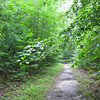 Where Our Paths Lead Us in Life - Wilson Nature Trail<br /> In 1997, another donor, this time anonymous, suggested that a longer trail circuit be improved so that it could be hiked by several people abreast and used by the cross-country team and bikers.  The finished trail was named, at the suggestion of many students as well as of the donor, in honor of President Wilson. It was dedicated on October 8, 1998, with a timed mountain-bike race.