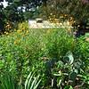 Master Gardener Display Garden & Arboretum - Bluebird Gap Farm - Hampton, VA