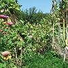 Interesting Gourd - Master Gardener Display Garden & Arboretum - Bluebird Gap Farm - Hampton, VA