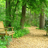 Peaceful Setting - Shall We Sit or Discover The Unknown Along the Path