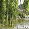 Lake at James Madison University - Harrisonburg, VA