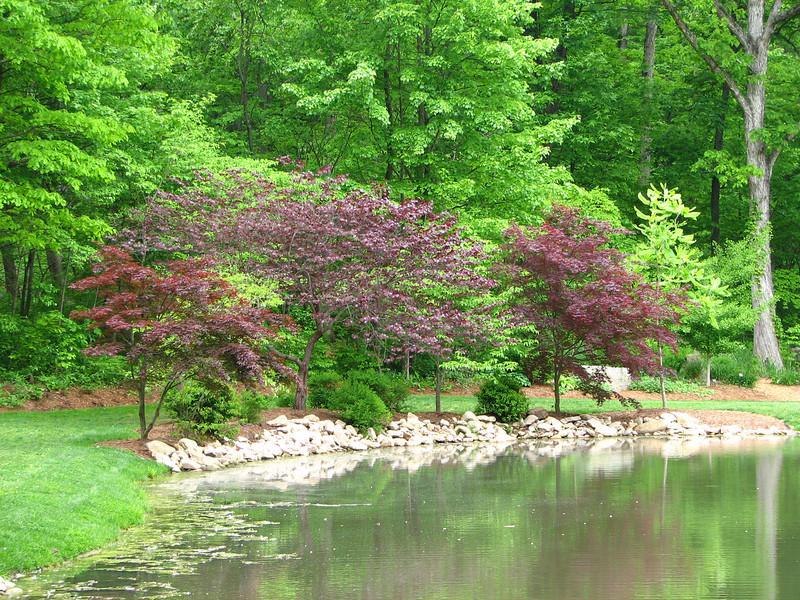Lovely Pond Scene