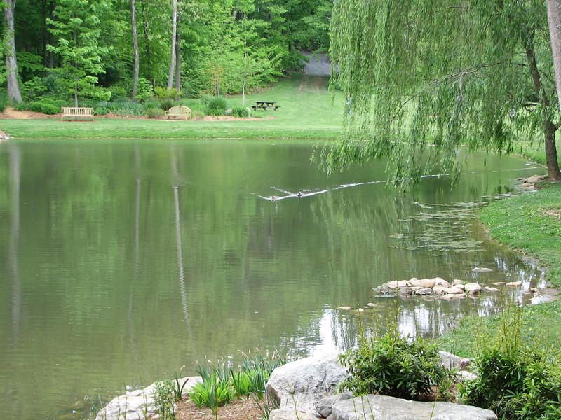 Lovely Pond Scene at Arboretum