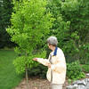 Louise With a Ginkgo Tree