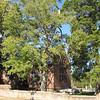 Closer Rear View of Memorial Church - Historic Jamestown National Park, VA  10-22-10