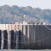 View from Glasshouse Point - Shorebirds on a Piling for the Ferry to Dock - Historic Jamestown National Park, VA  10-22-10