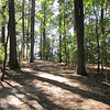 "Observations by George Percy in 1607 - Historic Jamestown National Park, VA  10-22-10<br />  ~~ "" ... walking into the Woods ... wee espied a pathway ... Wee traced along some foure miles ... the ground all flowing over with faire flowers of sundry colours and kindes, as though it had been in any Garden or Orchard in England."""