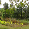 Corn and Tobacco Field - Humpback Rocks Homestead - Blue Ridge Parkway, Virginia