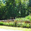 Garden Area - Fall Farm Fest at Humpback Rocks Homestead on the Blue Ridge Parkway  9/15/12<br /> Mostly corn since they do keep chickens here.