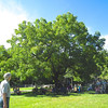 Huge Black Walnut Tree - Fall Farm Fest at Humpback Rocks Homestead on the Blue Ridge Parkway  9/15/12<br /> I've never seen one this big.