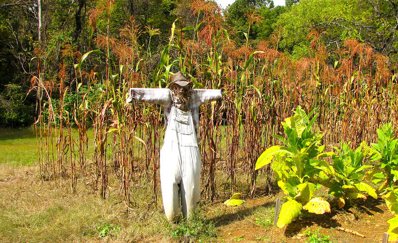 Scarecrow at Corn and Tobacco Field - Humpback Rocks Homestead - Blue Ridge Parkway, Virginia