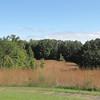 Restored Native Meadow - Ivy Creek Natural Area, Charlottesville, VA