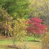 Autumn Colors - Jefferson Parkway Trail, Charlottesville, VA