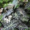 Beautiful Blend of Textures and Greens - Conservatory Garden - Lewis Ginter Botanical Gardens - Richmond, VA