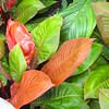 Gorgeous Leaf Colors - Conservatory Garden - Lewis Ginter Botanical Gardens - Richmond, VA