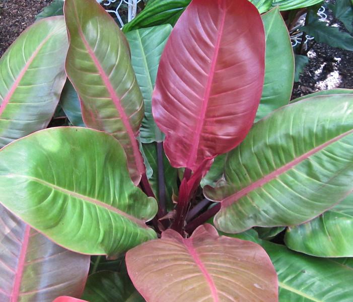 Love This Plant - Conservatory Garden - Lewis Ginter Botanical Gardens - Richmond, VA