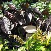 Concrete Toadstool in Garden - Conservatory Garden - Lewis Ginter Botanical Gardens - Richmond, VA