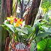 Corsage Orchid (Rhyncattleanthe Burana Beauty 'Burana' - Conservatory Garden - Lewis Ginter Botanical Gardens - Richmond, VA
