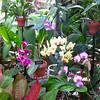 Variety of Orchids and Leaf Textures - Conservatory Garden - Lewis Ginter Botanical Gardens - Richmond, VA
