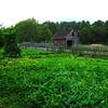 Garden Area Was Filled With Veggies - Meadow Farm - Glen Allen, VA