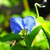 Bee On The Way to Lunch - Meems Covered Bridge - Mount Jackson, VA