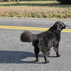This Friendly Dog Greeted Us While I Was Taking Photos<br /> We were on our way to Scottsville.  I don't like when dogs run loose, especially in the country with busy roads.  It seemed she was looking both ways before crossing back over.