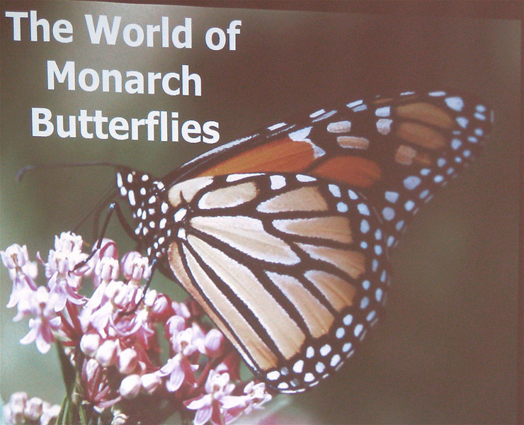 Talk About Monarchs - Tagging at Ivy Creek Natural Area - Charlottesville, VA  9-28-08