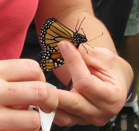 Charlottesville, VA - Monarch Tagging at Ivy Creek Preserve